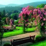 Rosenneuheitengarten auf dem Beutig