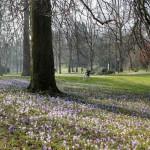 Frühling in der Lichtentaler Allee