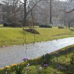 Blumen sprießen an der Oos